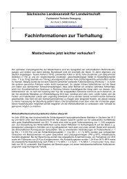 Mastschweine jetzt leichter verkaufen? - Landwirtschaft in Sachsen