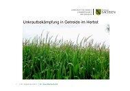Unkrautbekämpfung in Getreide im Herbst [Download,*.pdf, 1