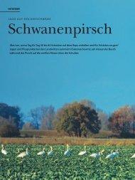 Schwanenpirsch - Hubertus Fieldsports