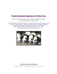 Panda Volunteer Experience & China Tour - Pandas International