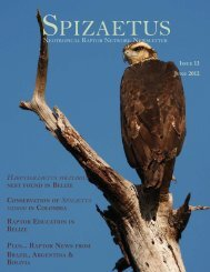 NRN Newsletter13 English.indd - Red de Rapaces Neotropicales