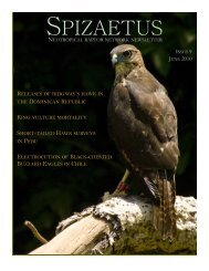 NRN Newsletter English Issue 9 - Red de Rapaces Neotropicales