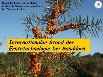Internationaler Stand der Erntetechnologie bei Sanddorn