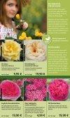 Rosen - 1A Garten Hauner - Page 4