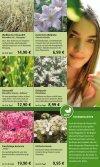 Rosen - 1A Garten Hauner - Page 5