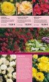 Rosen - 1A Garten Hauner - Page 6