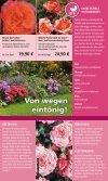 Rosen - 1A Garten Hauner - Page 7