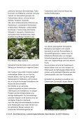 BN informiert: Naturschutz vor der Haustür - Der Wildgarten - Bund ... - Seite 5