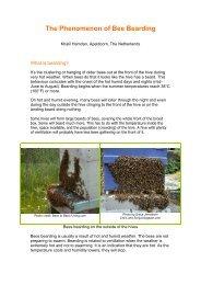 The Phenomenon of Bee Bearding - Country Rubes