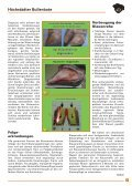 Höchstädter Bullenbote - Besamungsverein Nordschwaben eV - Seite 7