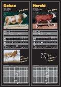 Bullenkatalog 2007 Fleckvieh - Rinderunion Baden-Württemberg e.V. - Seite 3