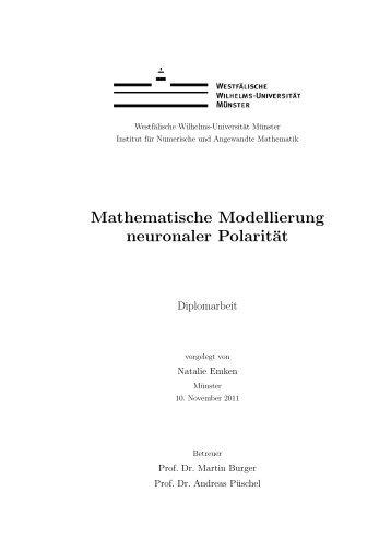Mathematische Modellierung neuronaler Polarität - Westfälische ...