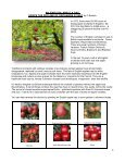 HILLINGDON ALLOTMENT AND HORTICULTURAL FEDERATION - Page 4