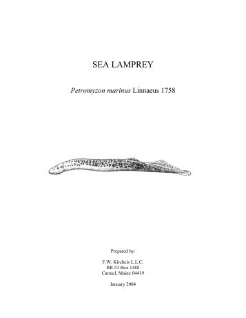 Application Of A Dichotomous Key To The Classification Sea