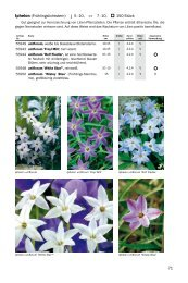 Blumenzwiebeln I-L