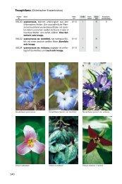 Blumenzwiebeln T-Z