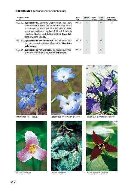 10 blumenzwiebeln Darwin Hybrid Tulpe Worlds Favourite