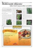 Okusi Mediterana Oljka - zlato drevo Solate - take in ... - Finance.si - Page 4