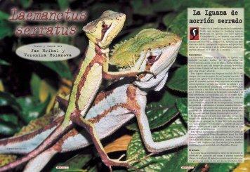 La Iguana de morrión serrado - Reptilia