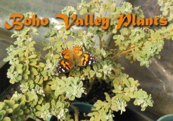 Boho Valley Plants - Visit Violet Town