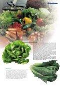 """1x1-Warenkunde """"Salate"""" - khd-Blog - Seite 4"""