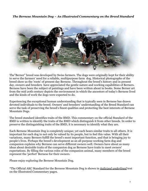 Illustrated Breed Standard Bernese Mountain Dog Club