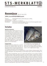 Rennmäuse - Schweizer Tierschutz STS