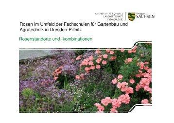 Rosen im Umfeld der Fachschulen für Gartenbau und