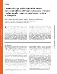 Caspase cleavage product of BAP31 induces mitochondrial fission ...