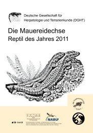 Die Mauereidechse – Reptil des Jahres 2011 - Verband Deutscher ...
