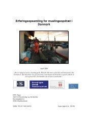 Erfaringsopsamling for muslingeopdræt i Danmark - DTU Aqua