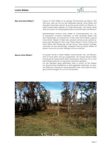 Lichte Wälder - Stiftung Wirtschaft und Ökologie SWO