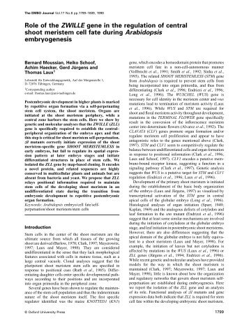 Role of the ZWILLE gene in the regulation of central shoot meristem ...