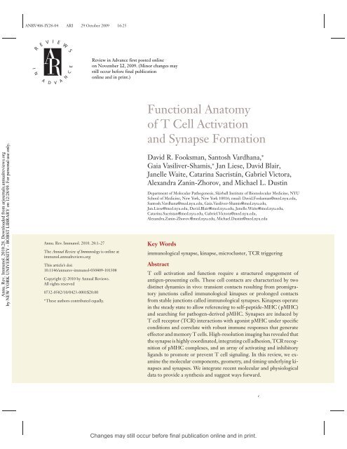 Functional Anatomy Of T Cell Activation And Synapse Formation