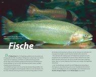 Text: Christian Wosch, Dippoldiswalde Fotos: Werner Fiedler, Uwe ...