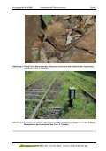 Artensteckbrief Mauereidechse - Beratungsgesellschaft NATUR - Seite 2