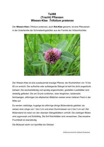 Teil88 (Tracht) Pflanzen Wiesen-Klee Trifolium pratense