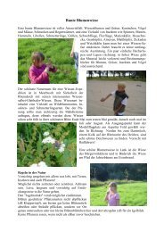 Handbuch Bunte Blumenwiese - NABU Neuss