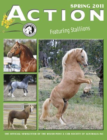 Action SPRING 2011 - The Welsh Pony & Cob Society of Australia Inc