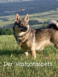 Der Västgötaspets - Schweizer Hunde Magazin