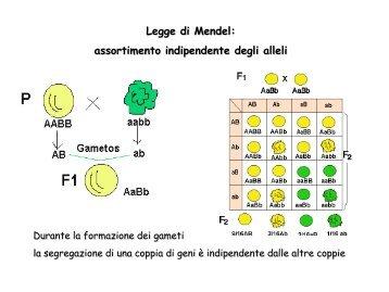 Help es V e IV Genetica Laura 2012 - web matic