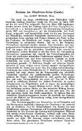 Revision der Omphreus-Arten (Carab.).