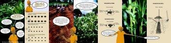 new maize leaflet KIKUYU.p65 - Smallholder Dairy Project