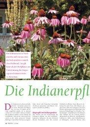 52-55 Echinacea - Natürlich