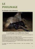 La revue trimestrielle du cheval barbe - Horizon Barbe - Page 4