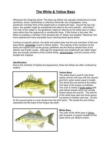 The White & Yellow Bass - Fishing in Illinois