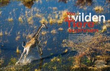 wilden die Wo - Jenman African Safaris