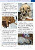 Vi venter hvalpe... - Dyredoktoren - Page 7