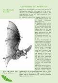 Fledermausbroschüre - BUND-Kreisgruppe Plön - Seite 4