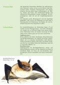 Fledermausbroschüre - BUND-Kreisgruppe Plön - Seite 6